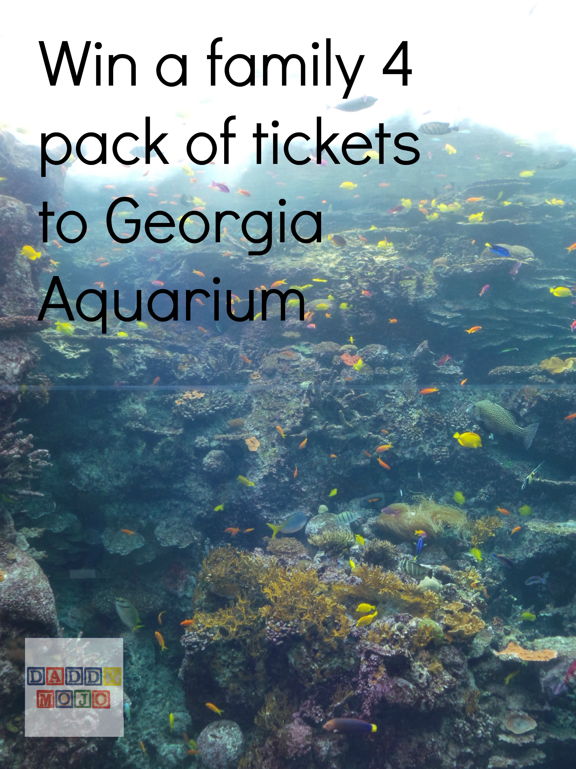 Win Tickets To Georgia Aquarium For A Family Of 4 Daddy Mojo