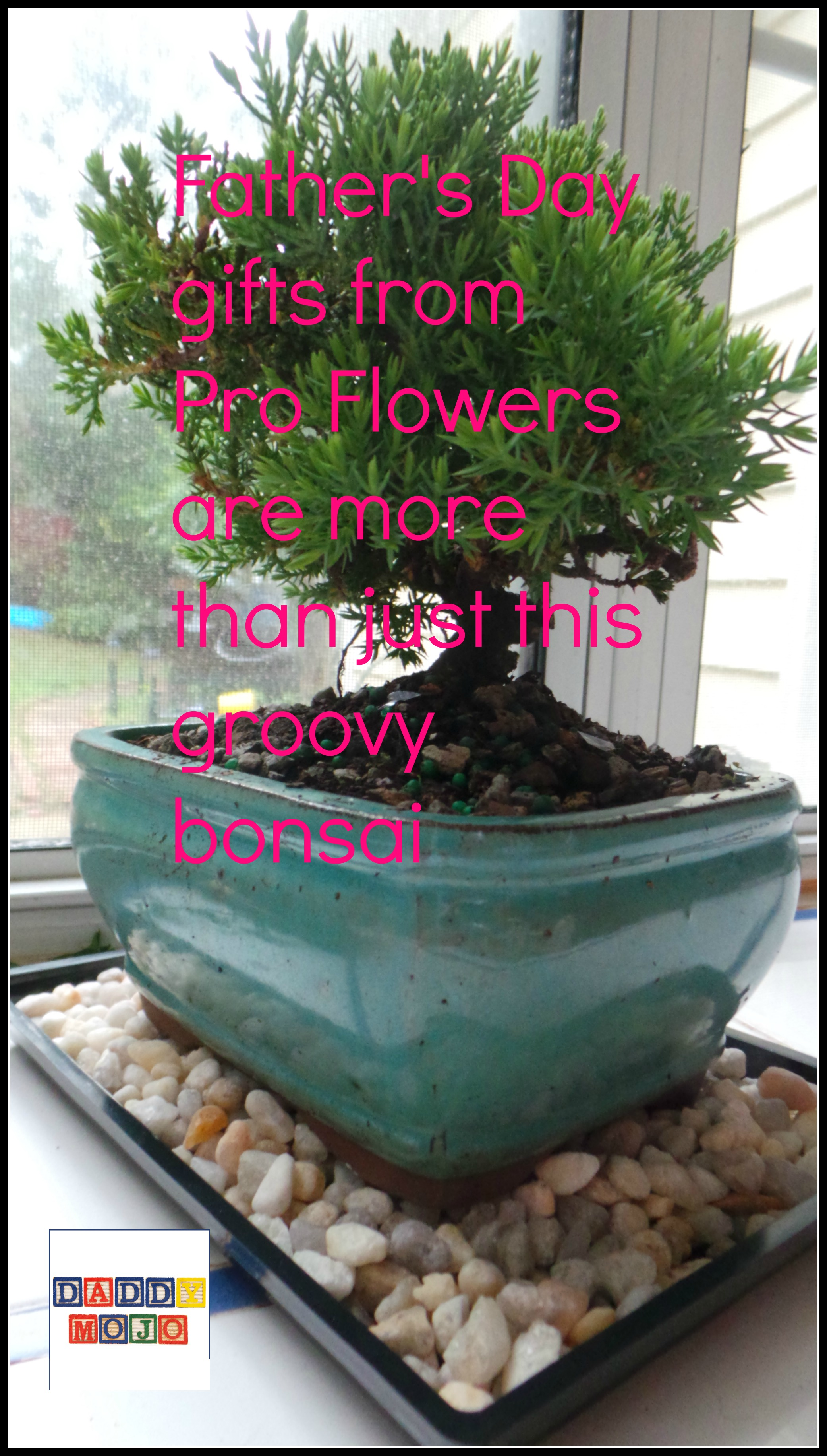 ProFlowers-great gifts dad will enjoy for Father\'s Day #Ad | Daddy Mojo