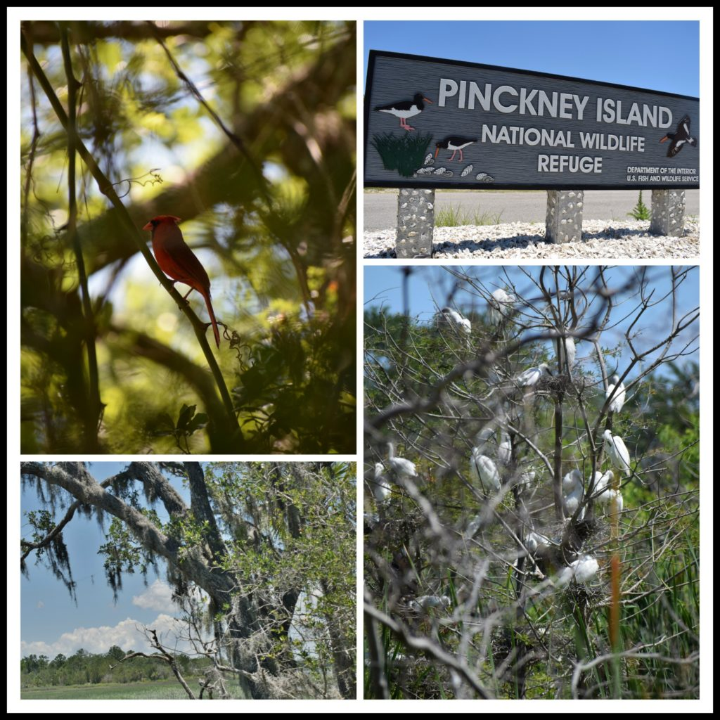 Pinckney Island, Hilton Head Island, nature, birds,
